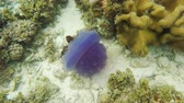 nettle : Beautiful jellyfish under water in the tropical sea..tropical underwater world.Diving and snorkeling in the tropical sea.Travel concept,Adventure concept.4K video,ultra HD. Stock Footage