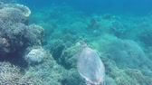 Мауи : Sea turtle swimming by coral reef.Diving and snorkeling in the tropical sea.Travel concept,Adventure concept.