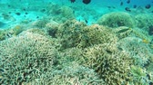 abismo : Many reef fish in the tropical sea on a coral reef.tropical underwater world