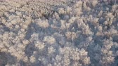 field ice : Aerial view of a winter forest. Snowy tree branch in a view of the winter forest. Winter landscape, forest, trees covered with frost, snow. Aerial footage, 4K video.