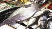 group of animal : Fresh fish in Asian market. Sale of fresh sea fish in the Asian public store. Sea fish lying on the shopboard at one of the street markets. 4K video, Philippines. Stock Footage