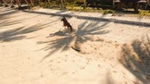 конный : Riding a horse at the beach. Aerial view:Rider galloping on horseback along the beach. Man riding horses on the beach in a sunny summer day. Siargao, Philippines. 4K video. Travel concept. Aerial footage.