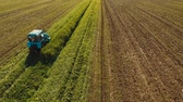 trawnik : Tractor mowing green field. Aerial view tractor being used to cut grass at a commercial turf growing farm. Aerial footage, 4K video.