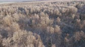 geada : Aerial view of a winter forest. Snowy tree branch in a view of the winter forest. Winter landscape, forest, trees covered with frost, snow. Aerial footage, 4K video.