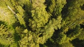 ель : Aerial view Green forest, treetops, forest area. Pine, spruce forest from above. Aerial footage, 4K video