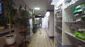 polc : Pharmacy store with medicines and pet products in a veterinary clinic. Drugstore and healthcare interior. Stock mozgókép