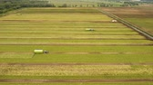 saŁata : Aerial view Rows of green salad grown in agricultural field. Lettuce field. Machine conveyor belt system to harvest Lettuce from a field. Salad on the field, salad growing, 4K, aerial footage. Wideo