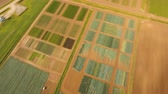 colheita : Aerial view of agricultural, cultivated fields. Agricultural landscape.Irrigated farmland. 4K, flying video, aerial footage Vídeos