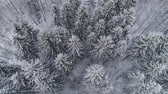 przeziębienie : Aerial view: winter forest. Snowy tree branch in a view of the winter forest. Winter landscape, forest, trees covered with frost, snow. Aerial footage, 4K video.