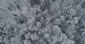 hűvös : Aerial view: winter forest. Flight over snowy tree branch in view of the winter forest. Winter landscape, forest, trees covered with frost, snow. Aerial footage, 4K video.