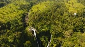 ryż : Aerial view of asian landscape with tropical forest, rice terrace field, waterfall, farmlands. Rice plantation,terrace, agricultural land of farmers. Bali, Indonesia. Aerial footage