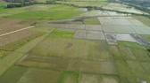 pirinç : Aerial view of rice plantation,terrace, agricultural land of farmers. Tropical landscape with farmlands on island Luzon, Philippines. Stok Video