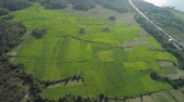 терраса : Aerial view of rice plantation,terrace, agricultural land of farmers. Tropical landscape with farmlands on island Luzon, Philippines. Стоковые видеозаписи