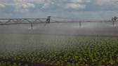 салат латук : Aerial view: Crop Irrigation using the center pivot sprinkler system. An irrigation pivot watering salad, lettuce field. Irrigation system watering farm field, 4K.