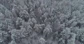 havadan görünüş : Aerial view: winter forest. Flight over snowy tree branch in view of the winter forest. Winter landscape, forest, trees covered with frost, snow. Aerial footage, 4K video.