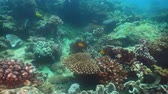 scuba dive : Tropical fish on coral reef at diving. Wonderful and beautiful underwater world with corals and tropical fish. Hard and soft corals. Philippines, Mindoro.