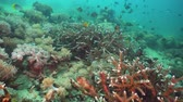 aquático : Fish and coral reef at diving. Wonderful and beautiful underwater world with corals and tropical fish. Hard and soft corals. Philippines, Mindoro. Diving and snorkeling in the tropical sea. Travel concept. Stock Footage