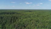 ель : Aerial view green forest, treetops, forest area. Pine, spruce forest from above. Flight over mixed forest on a sunny summer day