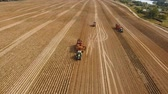farming equipment : Farm machinery harvesting potatoes. Farm machinery and trucks. Farmer field with a potato crop. 4K, aerial footage.