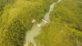 wood stream : Aerial river flowing in tropical rainforest Loboc river Philippines, Bohol. Mountain river flows through green forest Aerial footage Landscape.
