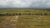 indonesia : Aerial view: rice plantation,terrace, agricultural land of farmers on the island Bali. 4K Aerial footage.