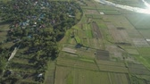 vadi : Aerial view of rice plantation,terrace, agricultural land of farmers. Tropical landscape with farmlands on island Luzon, Philippines. Stok Video
