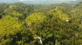 Бали : Aerial view of asian landscape with tropical forest, rice terrace field, waterfall, farmlands. Rice plantation,terrace, agricultural land of farmers. Bali, Indonesia. Aerial footage