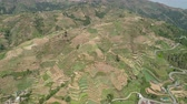 пики : Aerial view of rice terraces and agricultural farm land on the slopes of mountains valley. Cultivation of agricultural products in mountain province. Mountains covered forest, trees. Cordillera region. Luzon, Philippines, Baguio province. Стоковые видеозаписи