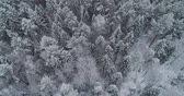 dondurucu : Aerial view: winter forest. Flight over snowy tree branch in view of the winter forest. Winter landscape, forest, trees covered with frost, snow. Aerial footage, 4K video.