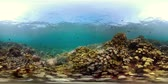 vr360 coral reef and tropical fish. underwater world with corals and lot fish. Hard and soft corals underwater landscape