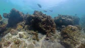 景观 : coral reef and tropical fish. underwater world diving and snorkeling on coral reef. Hard and soft corals underwater landscape
