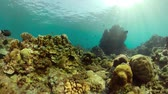 tropical fish and coral reef. underwater world diving and snorkeling on coral reef. Hard and soft corals underwater landscape
