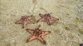denizyıldızı : Red starfish with spines on sand beach. Travel concept beach, sea, starfish.