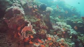 zátony : Fish and coral reef at diving. Wonderful and beautiful underwater world with corals and tropical fish. Hard and soft corals. Philippines, Mindoro. Diving and snorkeling in the tropical sea. Travel concept. Stock mozgókép