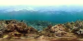 魚類 : vr360 coral reef and tropical fish. underwater world with corals and lot fish. Hard and soft corals underwater landscape