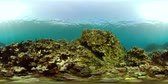 魚類 : coral reef and tropical fish. vr360 underwater world with corals and lot fish. Hard and soft corals underwater landscape