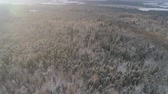 Aerial view: winter forest. Snowy tree branch in a view of the winter forest at sunset. Winter landscape, forest, trees covered with frost, snow. Aerial footage, 4K video. 動画素材