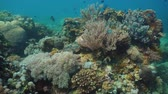 depth : Fish and coral reef at diving. Wonderful and beautiful underwater world with corals and tropical fish. Hard and soft corals. Philippines, Mindoro. Diving and snorkeling in the tropical sea.