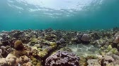 subaquático : coral reef and tropical fish underwater world diving and snorkeling on coral reef. Hard and soft corals underwater landscape