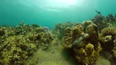 subaquático : tropical fish and coral reef underwater world diving and snorkeling on coral reef. Hard and soft corals underwater landscape
