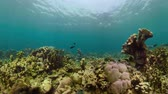 景观 : coral reef and tropical fish underwater world diving and snorkeling on coral reef. Hard and soft corals underwater landscape