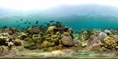 hloubka : coral reef and tropical fish. vr360 underwater world with corals and lot fish. Hard and soft corals underwater landscape