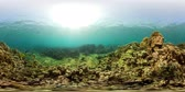 aquático : vr360 fish and coral reef at diving. underwater world with coral reef, tropical fish. Hard and soft corals. Indonesia Stock Footage