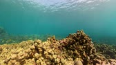 snorkelen : coral reef and tropical fish. underwater world diving and snorkeling on coral reef. Hard and soft corals underwater landscape