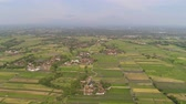 agrícola : agricultural landscape in asia with rice fields, farmers village agricultural land with sown green in countryside. farmland with agricultural crops in rural areas Java Indonesia. Land with grown plants of paddy Aerial footage.