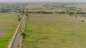 colheita : aerial view agricultural land with sown green, rice fields in countryside. farmland with agricultural crops in rural areas Java Indonesia. Land with grown plants of paddy Aerial footage.