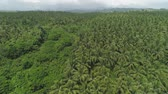 kokosový ořech : Aerial view of grove of palm trees in the hills against sky and clouds. Hills covered with green vegetation and coconut palms. Philippines, Luzon.