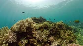魚類 : tropical fish and coral reef underwater world diving and snorkeling on coral reef. Hard and soft corals underwater landscape