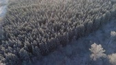 a view : aerial view winter landscape forest covered snow, frost. Frozen branches with hoarfrost in winter forest on sunny day
