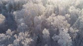 カバー : aerial view forest covered snow, frost. Frozen branches with hoarfrost in winter forest on sunny day winter landscape
